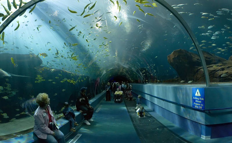 Living Planet Aquarium prepares for December opening