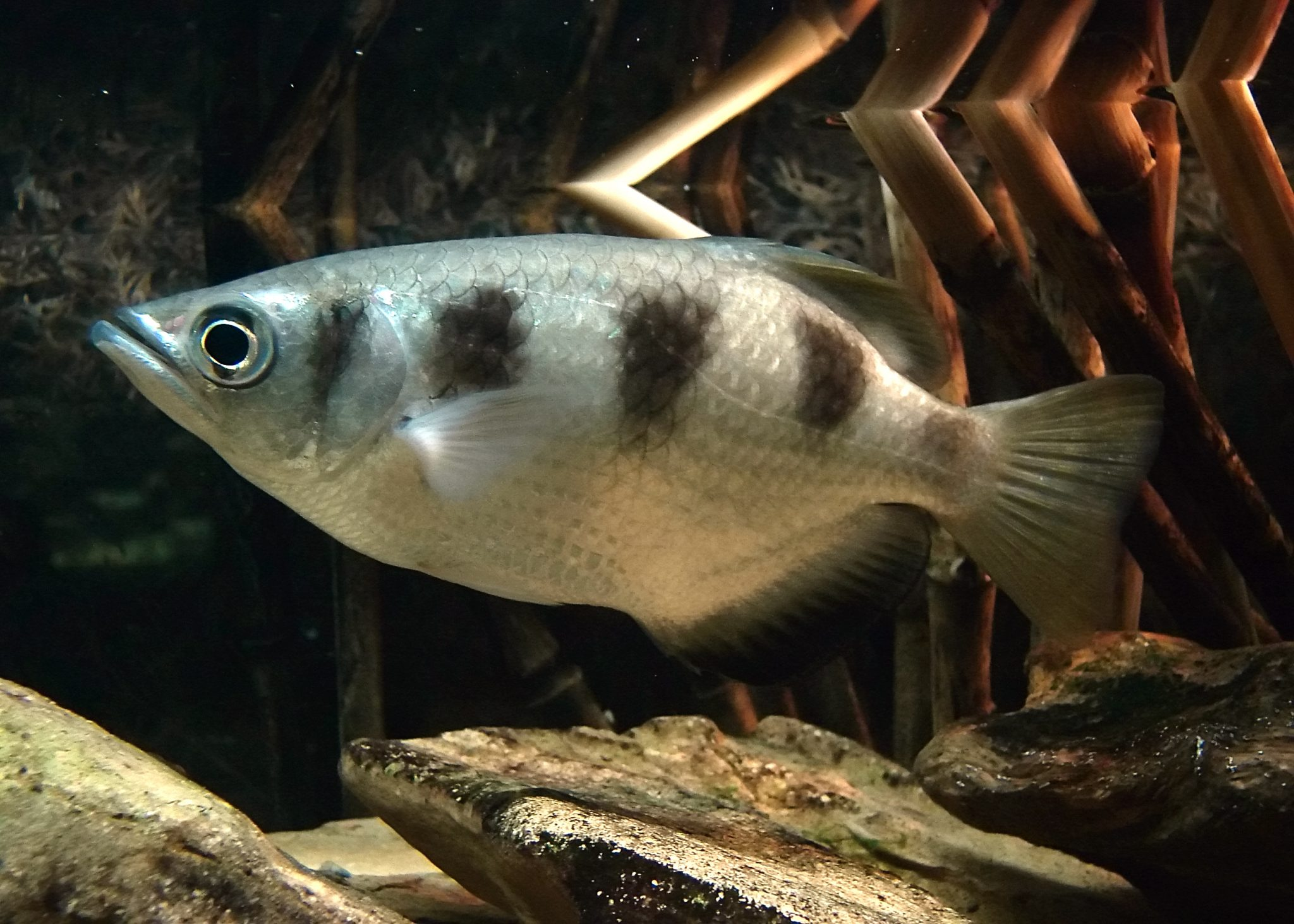 Favourite Fish - The Fish Doctor & Fish Breeder