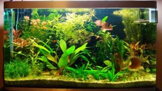 well_planted_aquarium_2