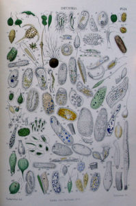 various types of infusoria
