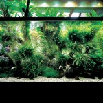 Advanced lighting freshwater aquarium