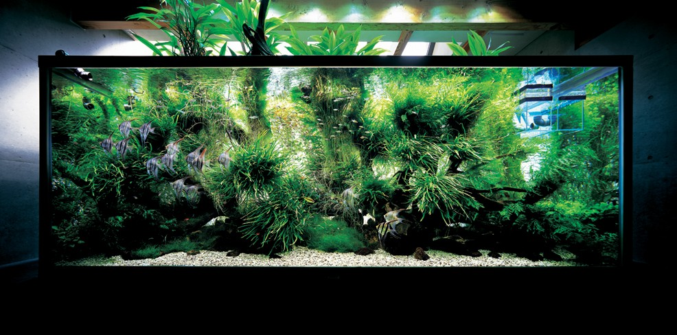 Get sophisticated with aquarium lighting
