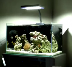 well lit marine aquarium