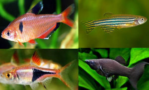 selection of beginners tropical fish