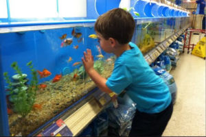 Child choosing fish in aquarium store