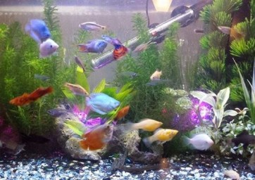 Starter fish groups for beginners the fish doctor amp fish breeder