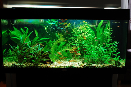 Succeed with aquarium plants