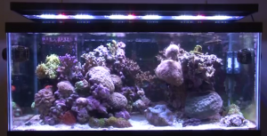 LED lit marine aquarium