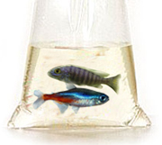 Beginners guide to newly bought fish