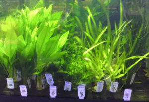 selection of beginners aquarium plants