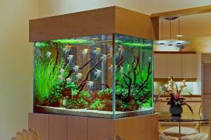 aquarium in kitchen