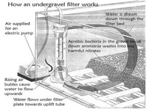 undergravel filter operation
