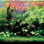 Plants flourishing in a planted aquarium