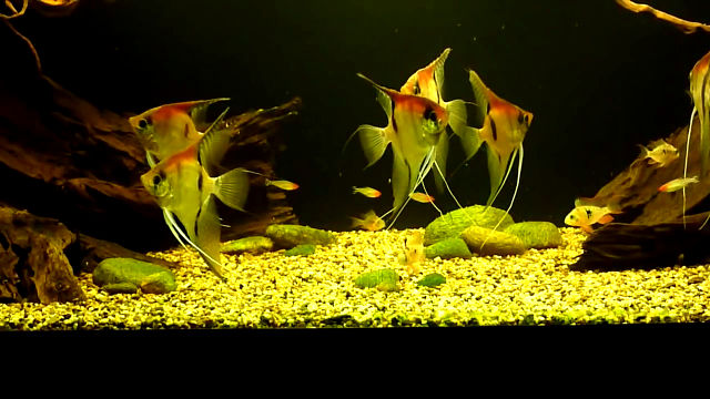 Amazon biotope aquarium