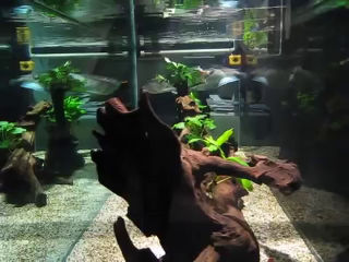 Clean and clear aquarium water