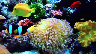 Succeed with marine corals
