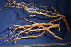 mail order driftwood is suitable for amazonian biotope