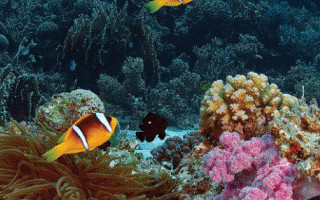 Set Up Your First Tropical Marine Tank The Fish Doctor