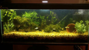 newly set up Walstad aquarium