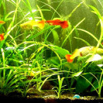 three year old Walstad aquarium