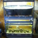 Complete aquaponics aquarium set up