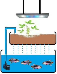 components of aquarium aquaponics system