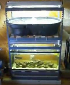 Setting up an aquarium aquaponics system