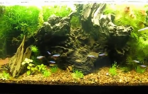 Balanced Aquascaped Rocks, Plants, Gravel And Fish