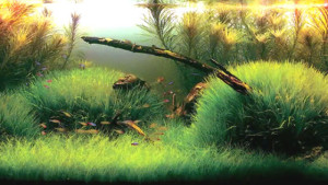 aquascape with clever use of various plants and driftwood