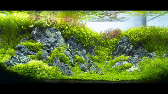 Attrayant Bedding Plants And Rocks Aquascape