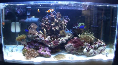 Your first saltwater aquarium: Step by step guide