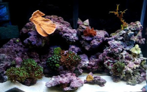 Live rock with coral sand in a beginners saltwater aquarium
