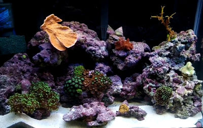 your first saltwater aquarium step by step guide the fish doctor rh thefishdoctor co uk Setting Up Saltwater Aquariums Beginners Beginner Saltwater Aquarium Filter Setup