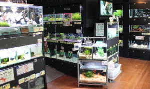 Your local aquarium pet store is a good source of fish