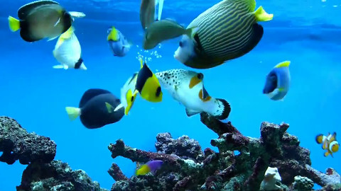 tropical marine fish feeding frenzy