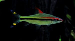 River fish are usually streamlined