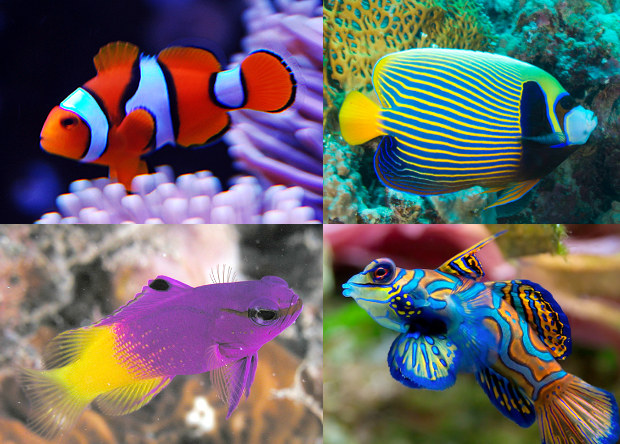 various tropical fish colours
