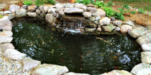 koi pond with stream