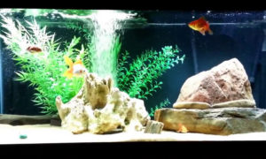 beginners coldwater fish tank
