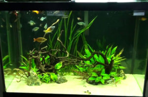 beginners tank fish feeding