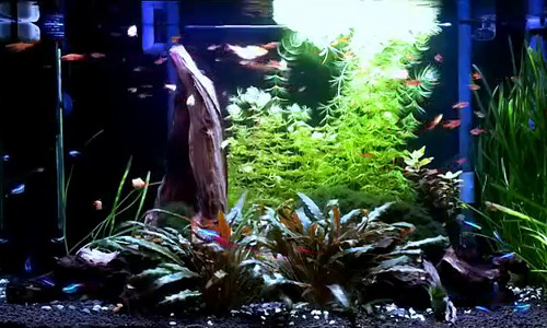 Cycling your aquarium