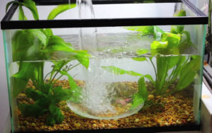 beginners aquarium