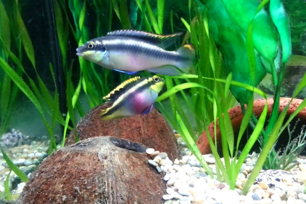 The fish doctor keep your tropical fish healthy and breeding for Best beginner fish