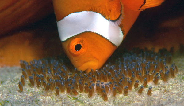 The fish doctor keep your tropical fish healthy and breeding for Saltwater fish food