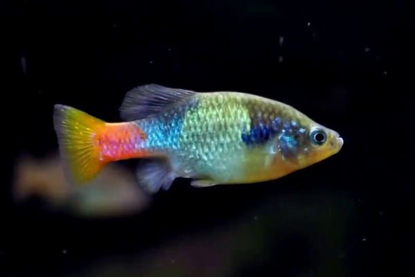 The fish doctor keep your tropical fish healthy and breeding for The fish doctor