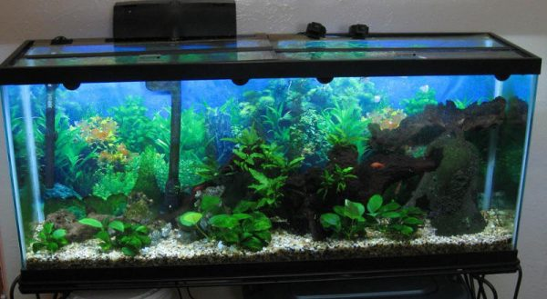 How to move a large aquarium